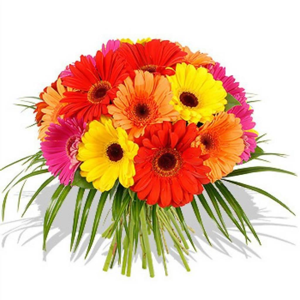 Прекрасны открытка, с днем рождения открытки цветы герберы